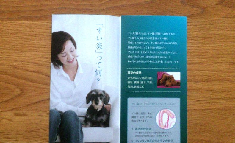 愛犬が膵炎(すいえん)と診断されて1週間が経過しました。